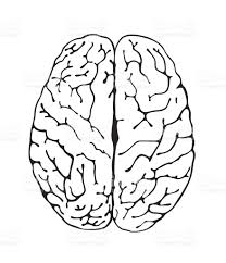 brain anatomy coloring book brain a top view stock vector art 475021859 istock