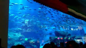 Bill Gates House Interior Pics by The Worlds Largest Aquarium In My Views From Dubai Mall Youtube
