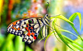 1271 butterfly hd wallpapers backgrounds wallpaper abyss