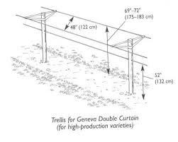 Growing Grapes Trellis Ksu Viticulture Canopy Managment Garden Design Pinterest