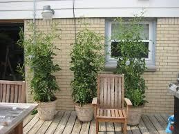 giant tomato plants angela u0027s gracious garden