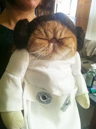 Princess Leia Halloween Costume 25 Terrifyingly Cute Halloween Costumes Pets Bored Panda