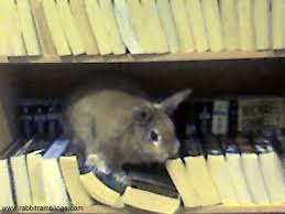 rabbit library rabbit ramblings bunny proof your books