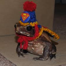 Toad Halloween Costume Tiny Superman Hat Cape Bearded Dragons Guinea Pigs