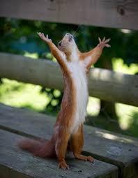 Dramatic Squirrel Meme - dramatic squirrel photoshopbattles