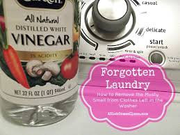 how to get rid of musty smell in furniture forgotten laundry how to remove the stink from clothes left in