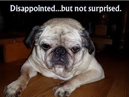 Disappointed Dog Meme - riley disappointed but not surprised fluffybutts funny dog meme