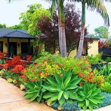 Tropical Gardening Ideas A Cool Tropical Gardens In The Front Yard