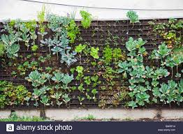 Garden Wall Systems by Exclusive Design Vertical Garden Wall Innovative Decoration