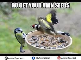 Meme Bird - crazy bird memes png