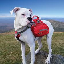 dog barn amazon com kurgo baxter tm dog backpack for hiking walking or