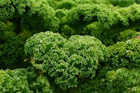free images flower food green produce garden kale brassica