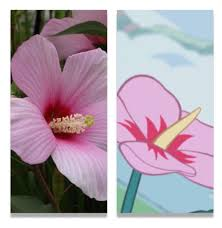 which state has a hibiscus steven u0027s dream theory steven universe amino