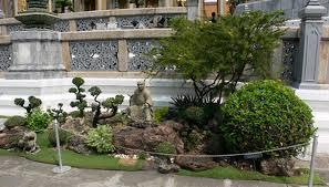 how to repair my bonzai tree garden guides