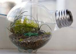 10 terrarium containers projects for your kids