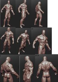 Human Anatomy Reference 163 Best References Anatomy Images On Pinterest Anatomy