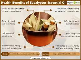 15 wonderful benefits of eucalyptus oil organic facts
