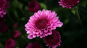 Beautiful Plants by Flower Tag Wallpapers Page 14 Flowers Colorful Flower Beautiful