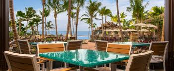 laura ashley home cycas palm tree in pot reviews wayfair loversiq