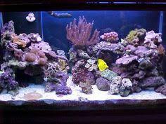 Live Rock Aquascaping Ideas Reef Aquascaping Designs Live Rock Aquascaping Page 2 Reef