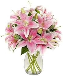 stargazer lilies benchmark bouquets 8 stem stargazer bunch with
