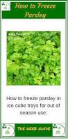 freezing parsley