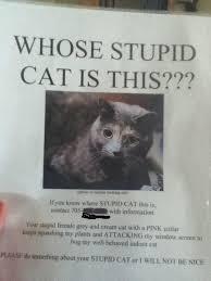 Stupid Cat Meme - photo of similar looking cat passiveaggressivenotes com
