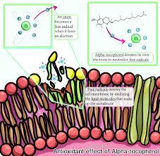 vitamin e hopes huntington u0027s disease information