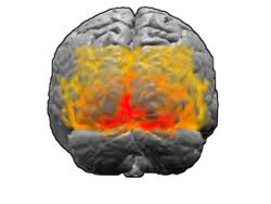Cortical Blindness May Result From The Destruction Of Visual Cortex Wikipedia