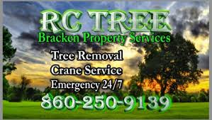 Business Cards For Tree Service New Business Cards For Rc Tree In Farmington Ct Rc Tree Service
