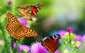Butterfly Flower Youwall Butterfly And Flowers Wallpaper Wallpaper Wallpapers