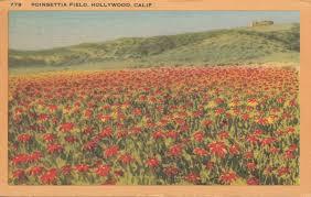 vintage postcards the sign