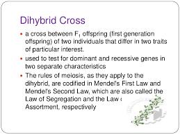 Dihybrid Crosses Worksheet Monohybrid And Dihybrid Cross 1