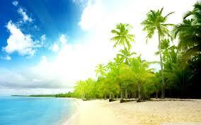palm trees beach uhd desktop wallpaper for ultra hd 4k 8k