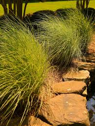 tips for cutting ornamental grasses and laying mulch epling