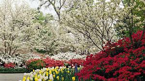 spring flower drives and botanical garden tours southern living
