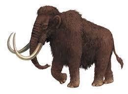evolution elephants files encyclopedia