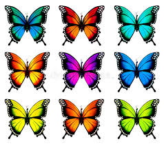 refundable colorful pictures of butterflies colourful butterfly