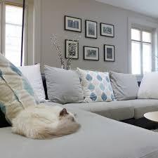 comment eviter les griffes de sur canape quel revêtement de canapé choisir quand on a des animaux