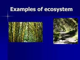 by josilyn thomas period3science mr sunesara ecosystem powerpoint