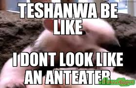 Anteater Meme - teshanwa be like i dont look like an anteater meme custom 1915