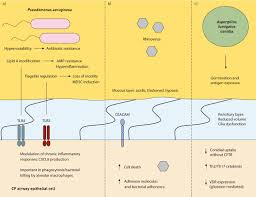 current concepts host u2013pathogen interactions in cystic fibrosis