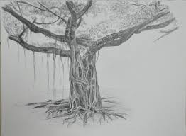 drawn rennaisance tree pencil and in color drawn rennaisance tree