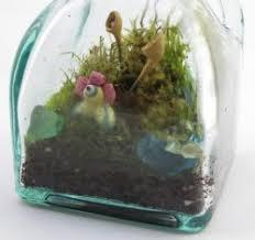 guest artist terrariums