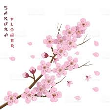 Japanese Cherry Blossom Tree by Sakura Blossom Japanese Cherry Tree Stock Vector Art 610015252