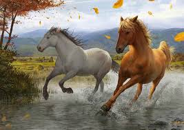 mustang horse running photos horses running animals painting art
