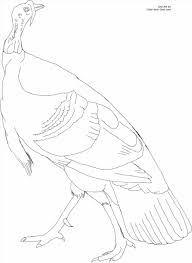thanksgiving turkey color coloring pages happy thanksgiving pages turkey sheet a to z