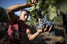boutique revolution puts israeli wines on world map daily mail