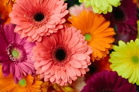 wedding flowers on a budget 16 inexpensive wedding flowers that still look beautiful for