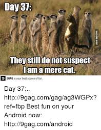 Mere Cat Meme - day 37 they still do not suspect i am a mere cat 9gag is your best